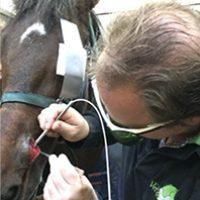 Cyste neus paard 3